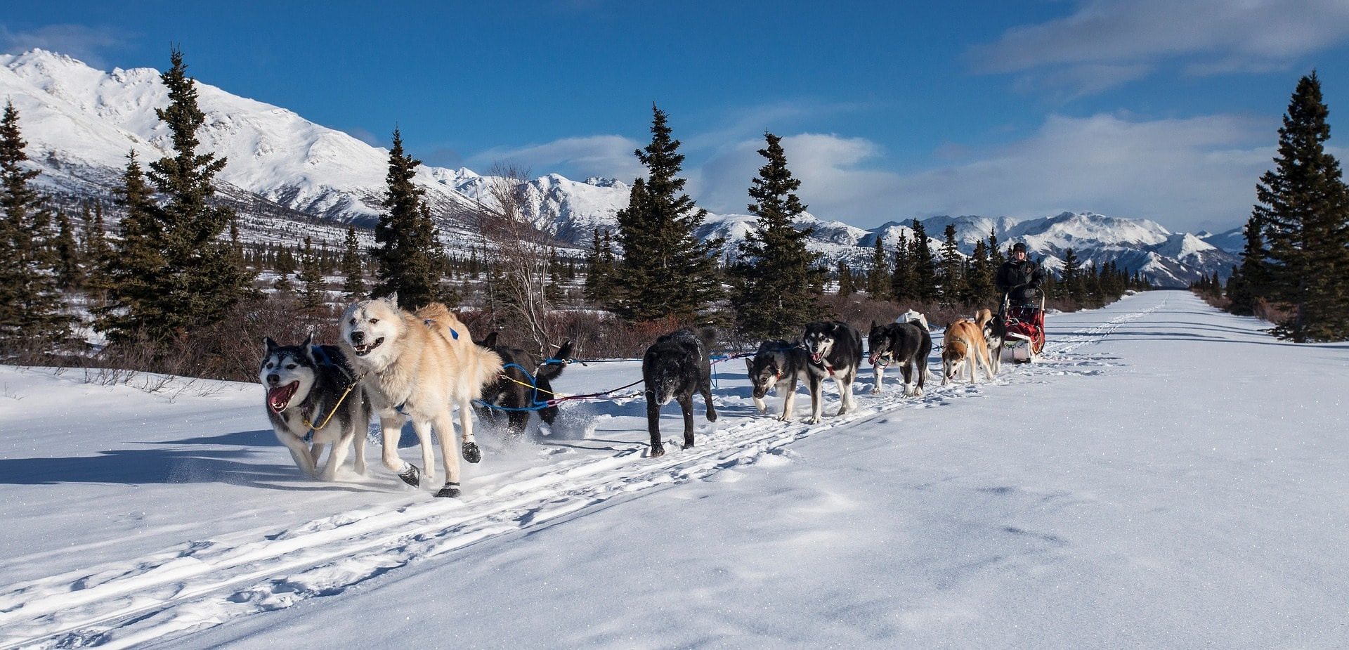 You can participate in a dog sled ride in all kinds of ways. This ranges from 20-minute excursions to multi-day husky tours along jungle huts.