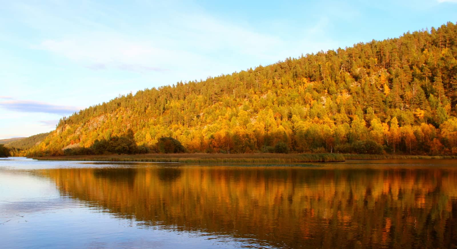 In the fall, the trees of the Lemmenjoki National Park color in beautiful shades of yellow and brown